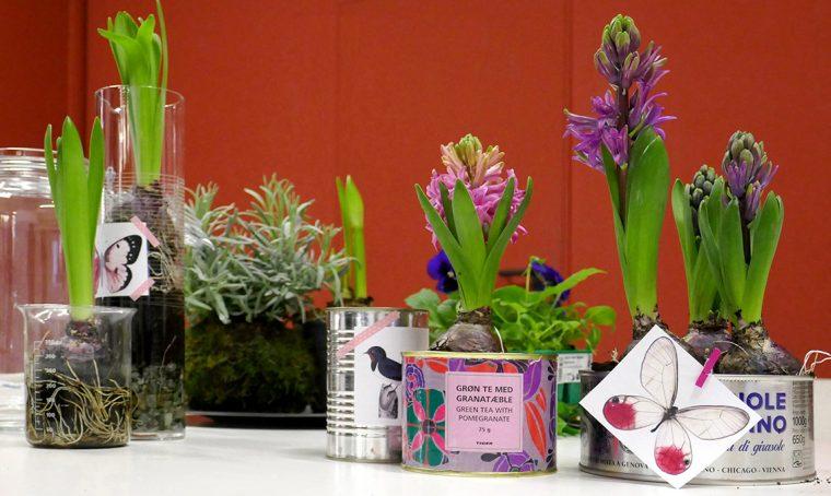 Contenitori di recupero per i bulbi di giacinto