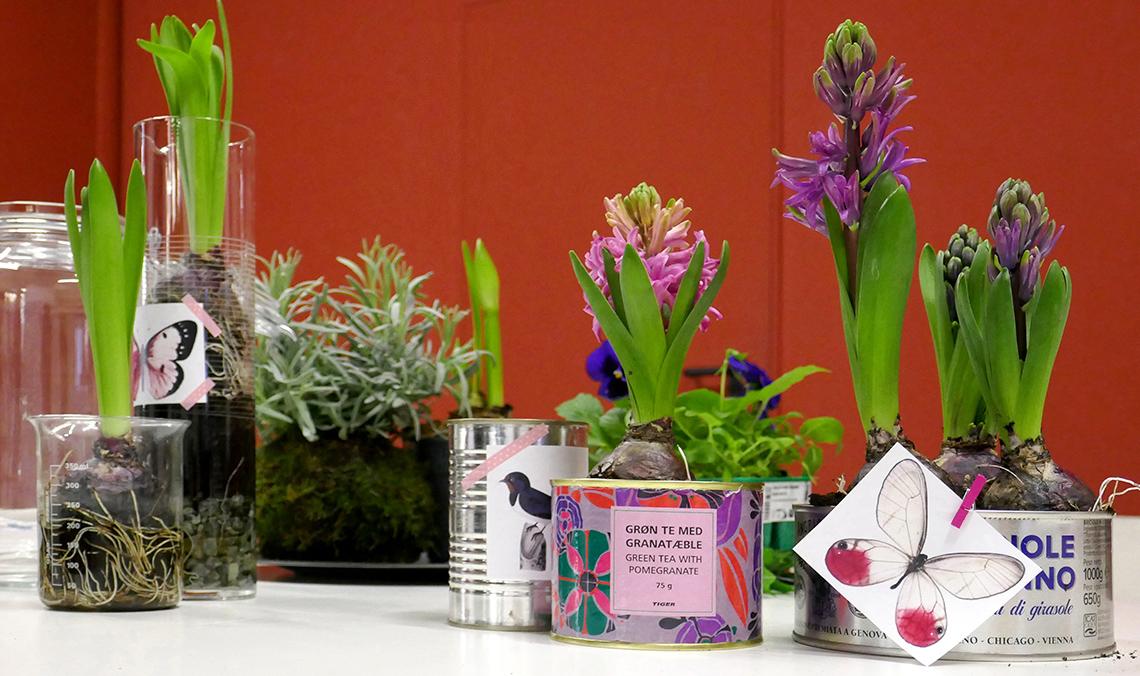 contenitori per bulbi di giacinto