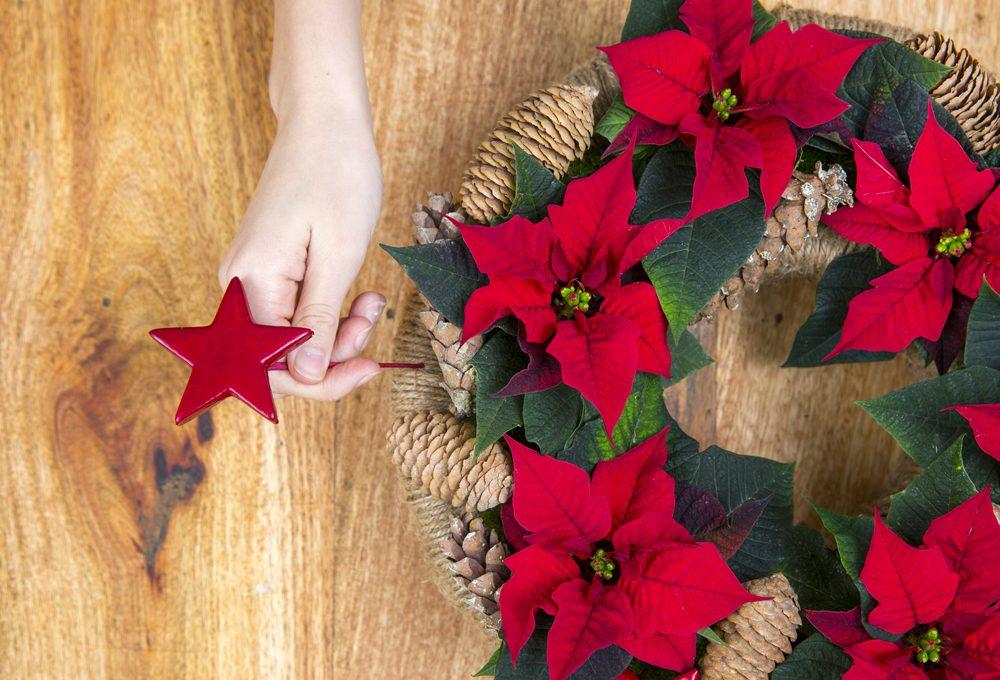 Come Mantenere Stella Di Natale.Come Far Durare La Stella Di Natale Casafacile