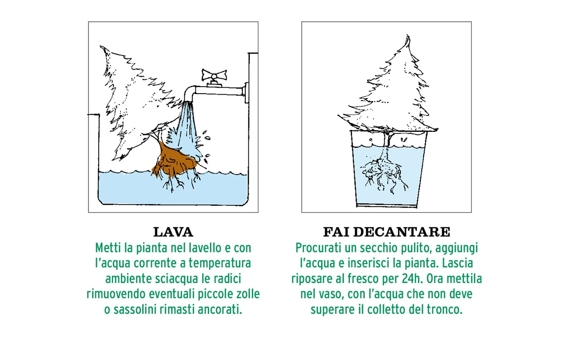 idrocoltura