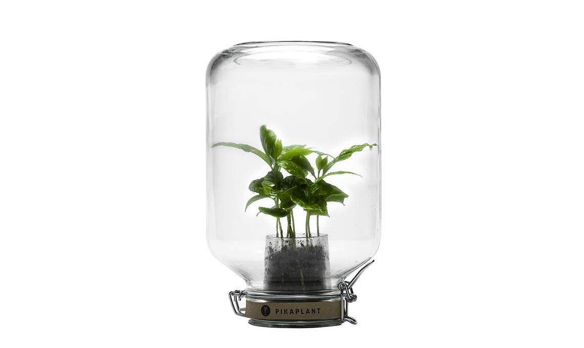 serra in vaso