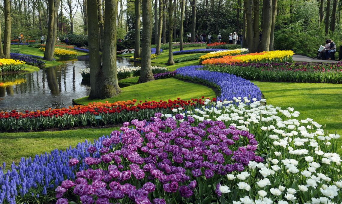 bulbi Olanda