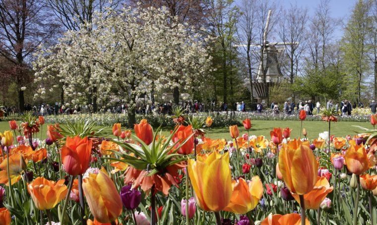 In primavera riapre il Keukenhof: il parco di tulipani più bello d'Olanda