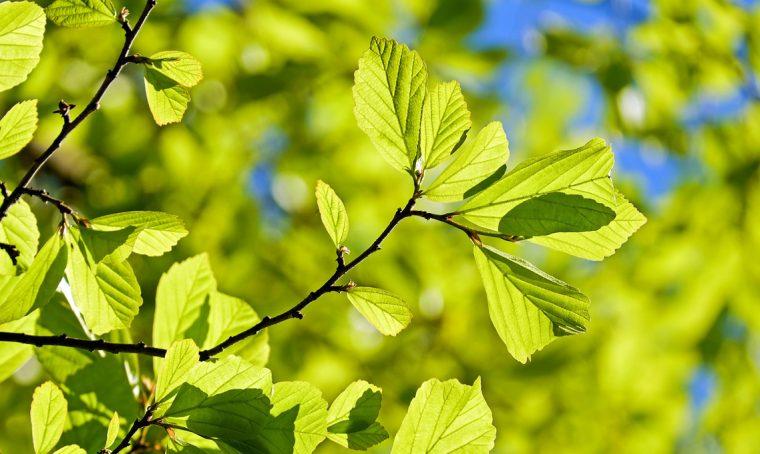 Come diventare un albero: idee per vivere 'oltre'