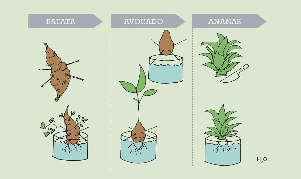 coltivare verdura in casa