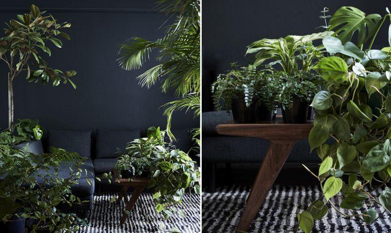 Vasi neri moderni per le tue piante