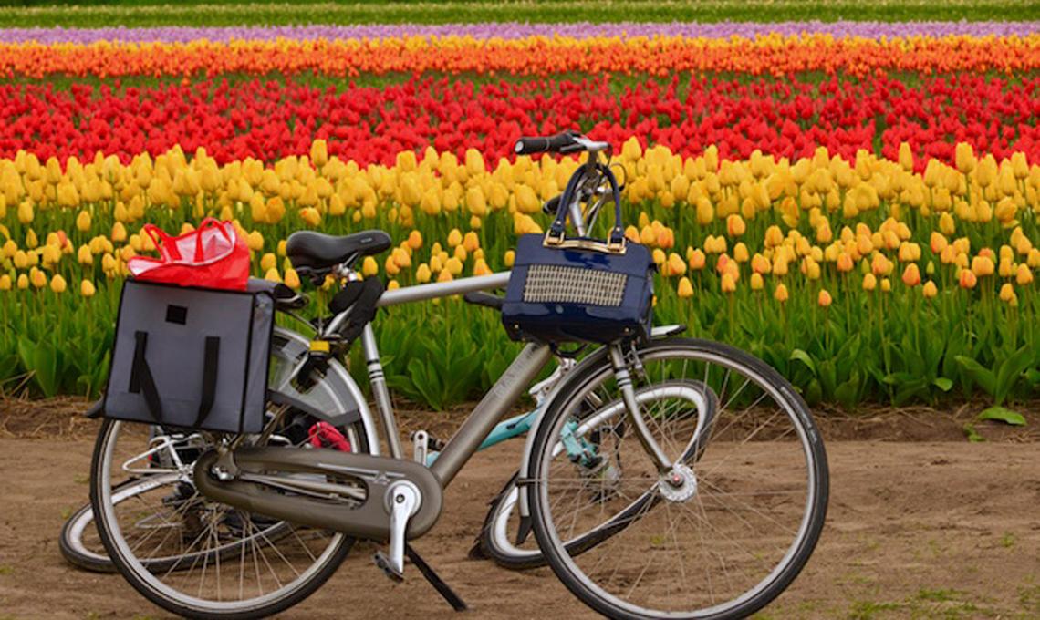 tulipani Olanda