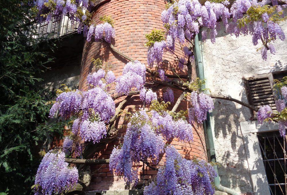 Conosci l'Orto Botanico di Brera?