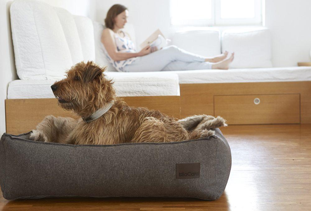 Ciotole, cucce e accessori per cani e gatti