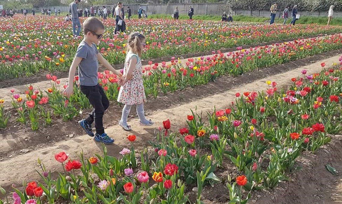 Una fotografia scattata nel campo di tulipani di Cornaredo nel 2017