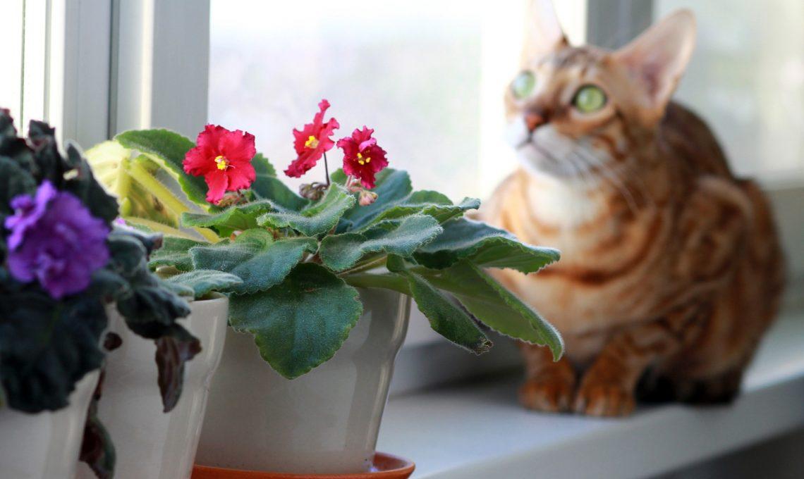 animali e piante