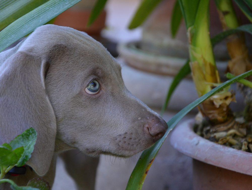 Quali sono le piante nocive per gli animali domestici
