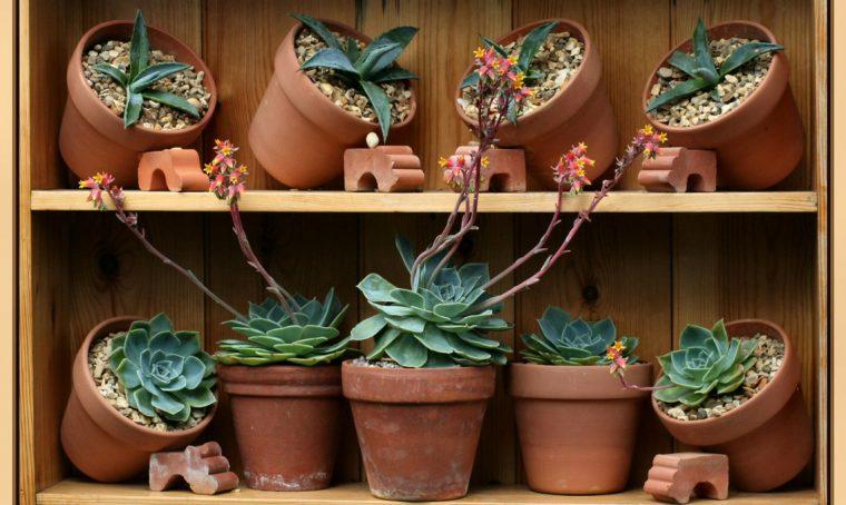 Terracotta o plastica: scegli il vaso giusto
