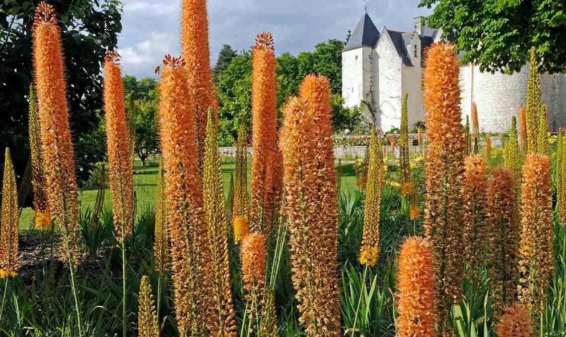 Fiori Gialli Loira.Il Castello Di Rivau Giardini Da Visitare Nel Cuore Della Loira