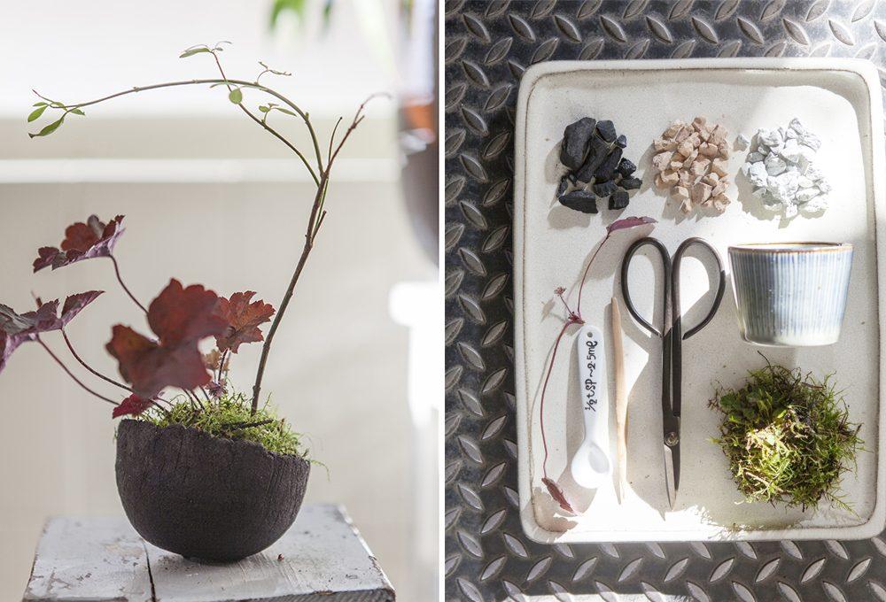 Come fare un Kusamono: il mini giardino giapponese