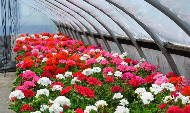 10 consigli per acquisti consapevoli di piante e fiori