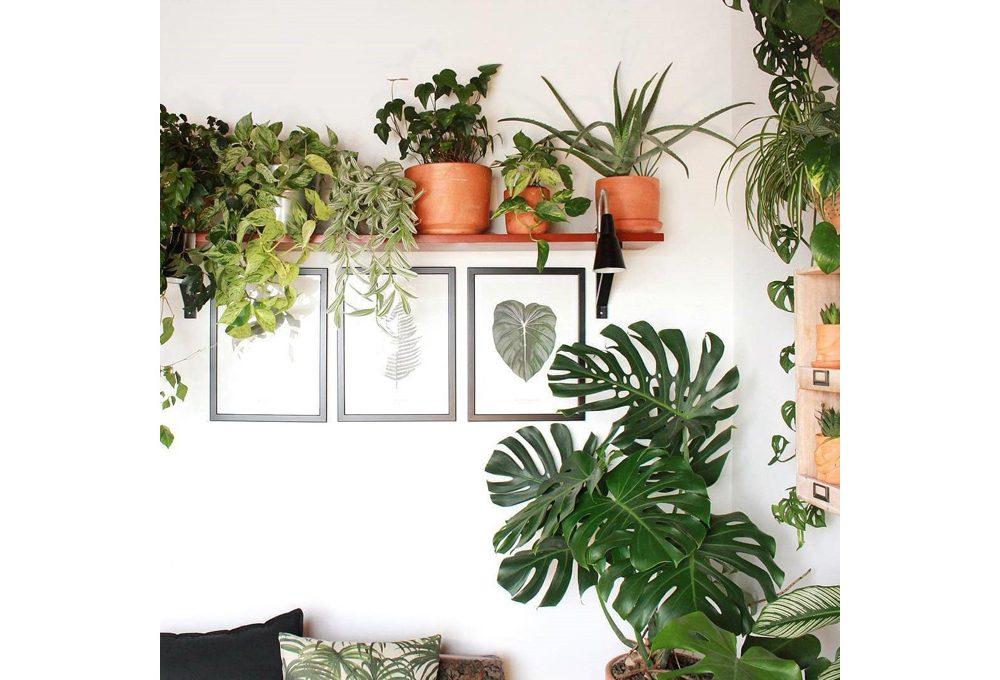 5 profili instagram per appassionati di piante