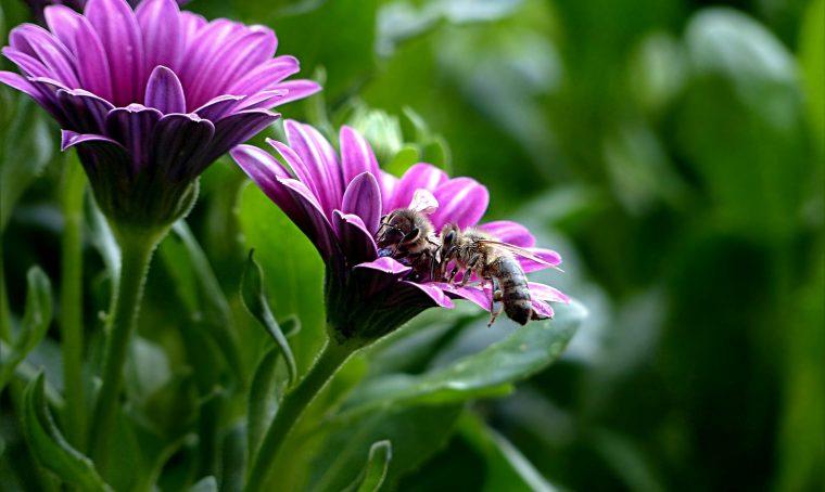 fiori api