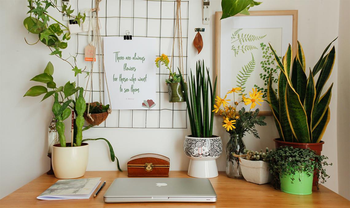CasaFacile_ACaputo_piante_scrivania