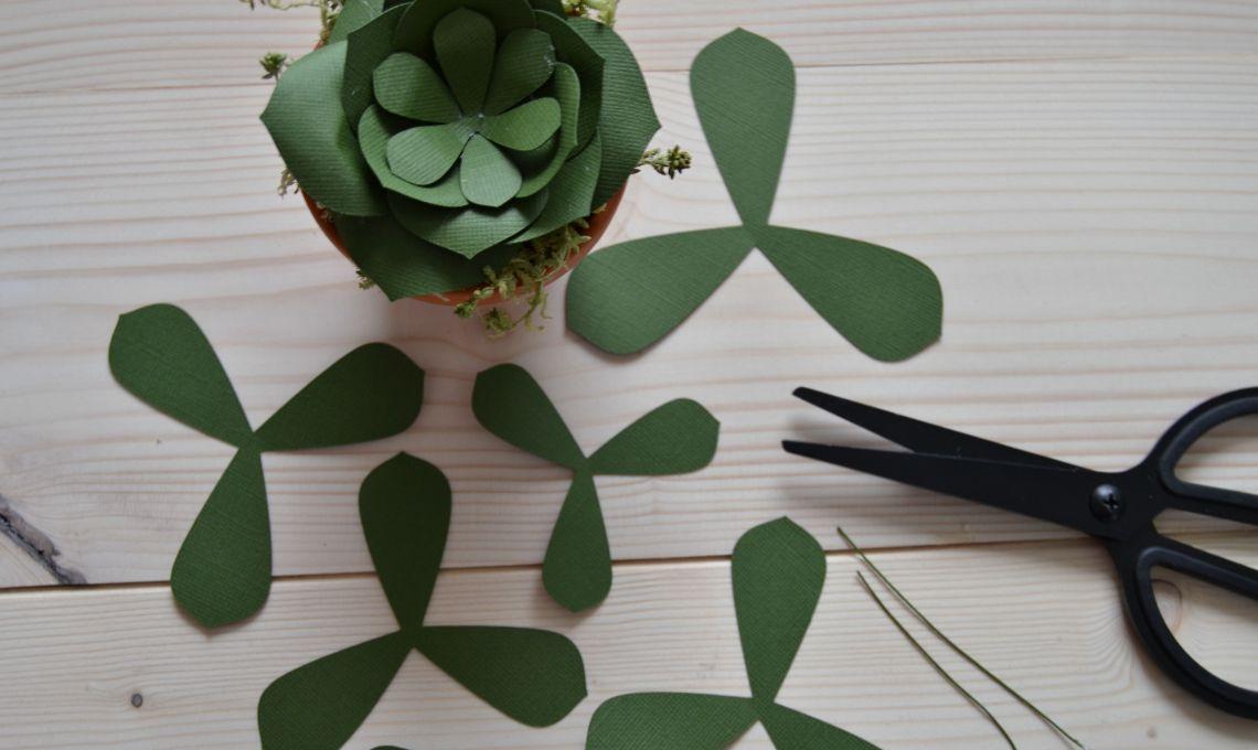 CasaFacile_CIGoccione_succulente_carta