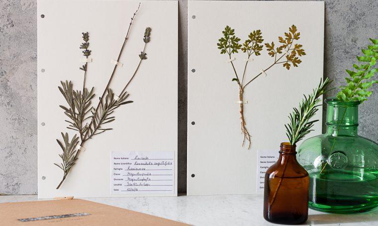 Stile botanical: crea un Erbario a libro
