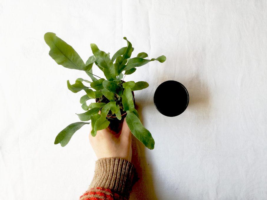 CasaFacile_VIcardi_minimalismo_piante