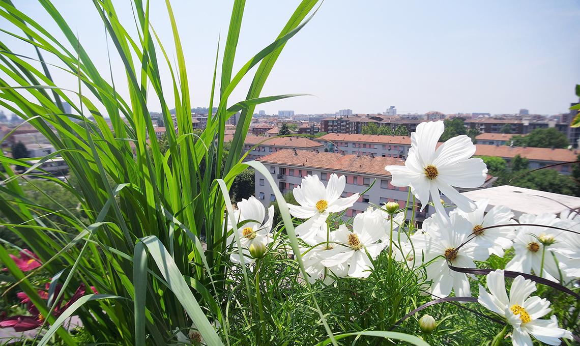 fiori terrazzo