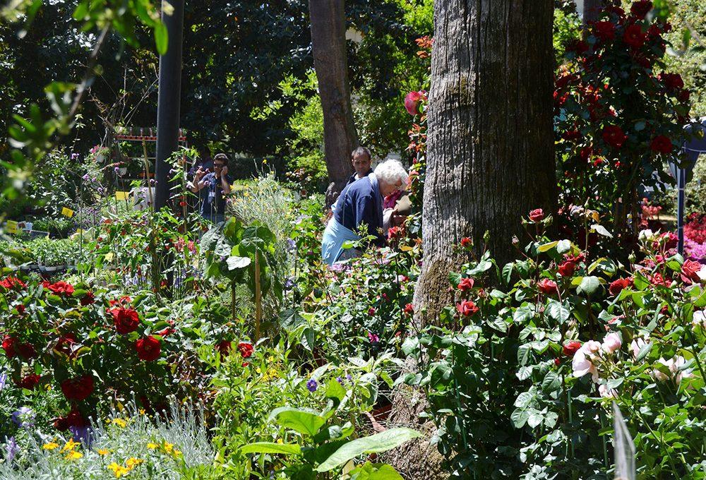 15 fiere, eventi e mostre dedicate a piante e fiori a maggio 2018