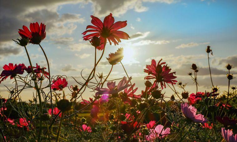 Solstizio d'estate negli Orti Botanici della Lombardia