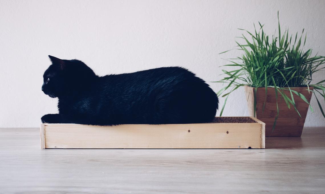 CasaFacile SDeRocchi Gatti tiragraffi daidate gatta nera