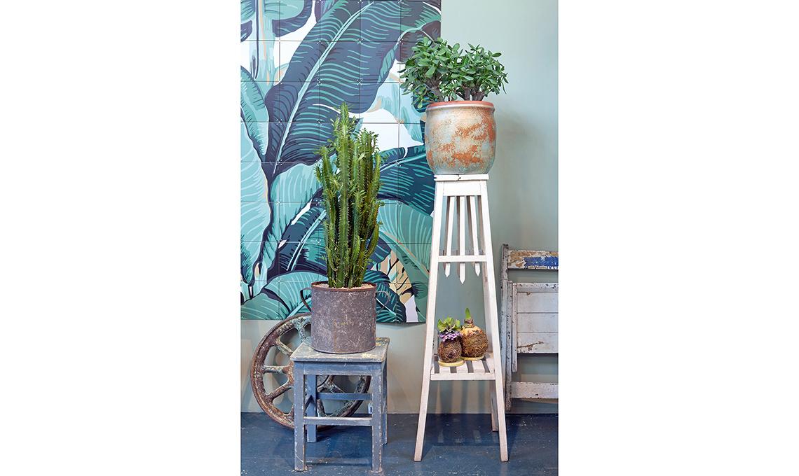 trespolo piante