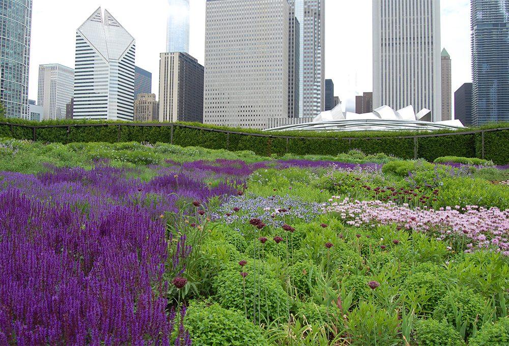 Salvia: le varietà da fiore per decorare balconi e giardini