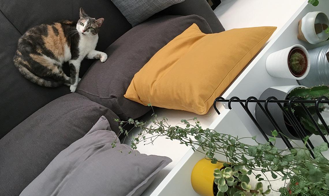 CasaFacile MCima gatto e piante appese