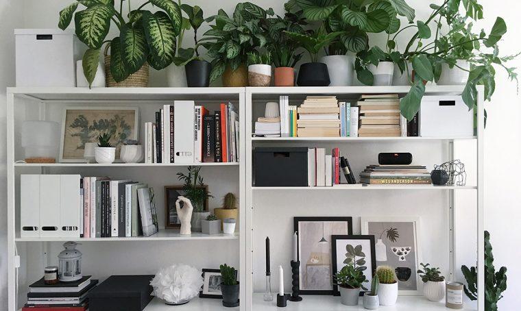 Gatti e piante d'appartamento: farli convivere si può!