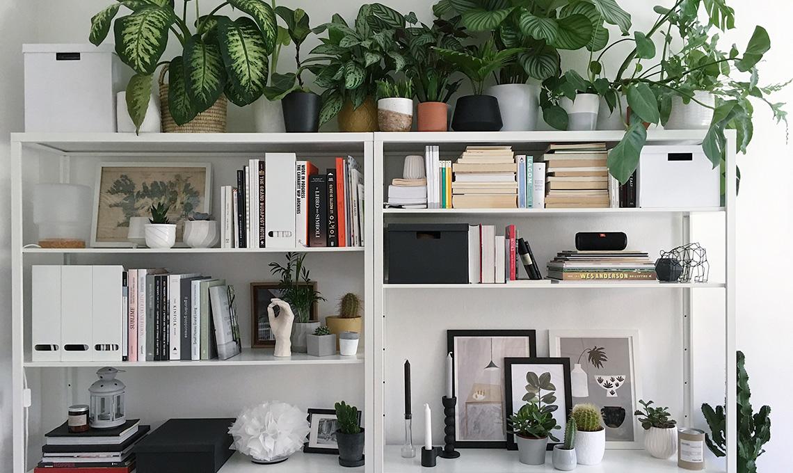 CasaFacile MCima gatto e piante libreria