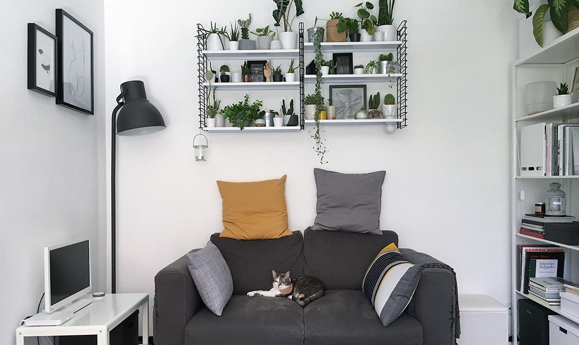 CasaFacile MCima gatto e piante mensole