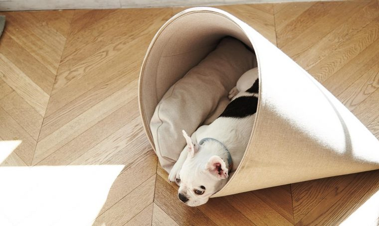 Design e comfort in 10 letti… per cani