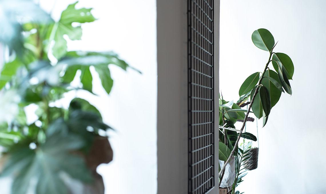 CasaFacile VIcardi 5 errori piante appartamento