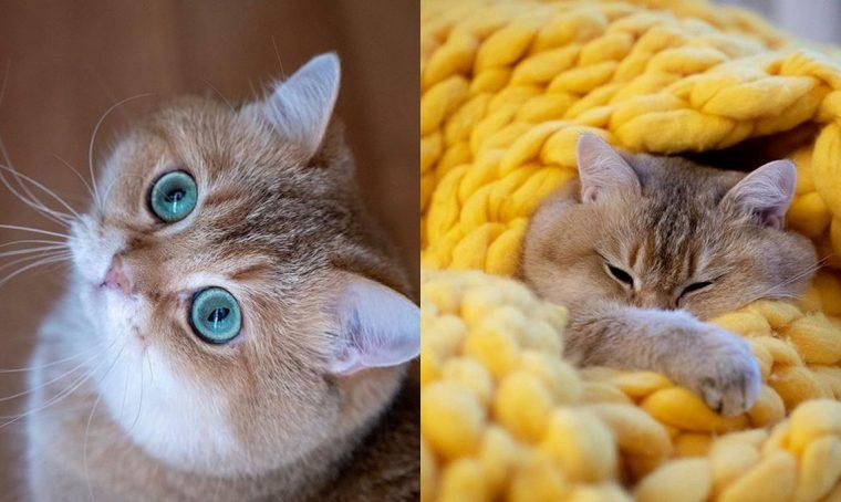 5 profili Instagram per gli amanti dei felini
