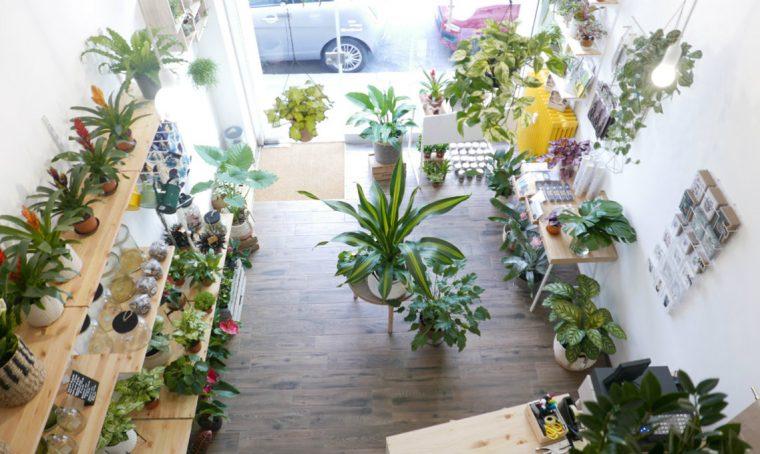 WILD – I consigli degli esperti per il verde domestico
