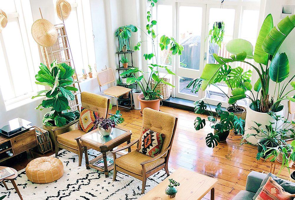 7 cose da fare quando riporti le piante in casa