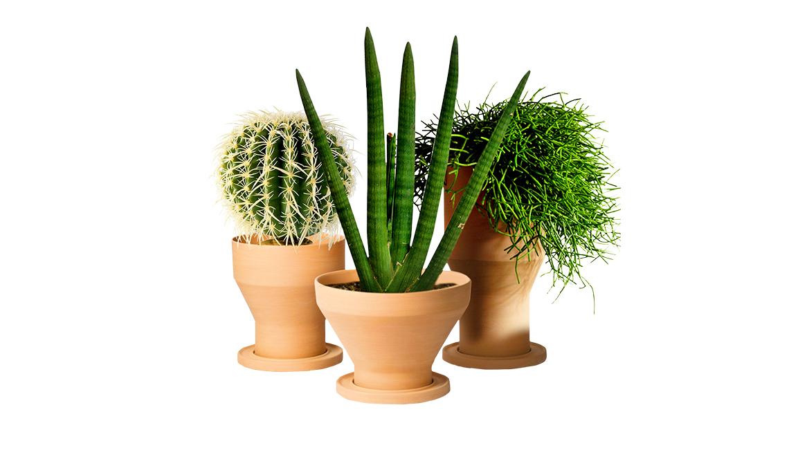 Come riparare i vasi di terracotta casafacile for Vasi erba