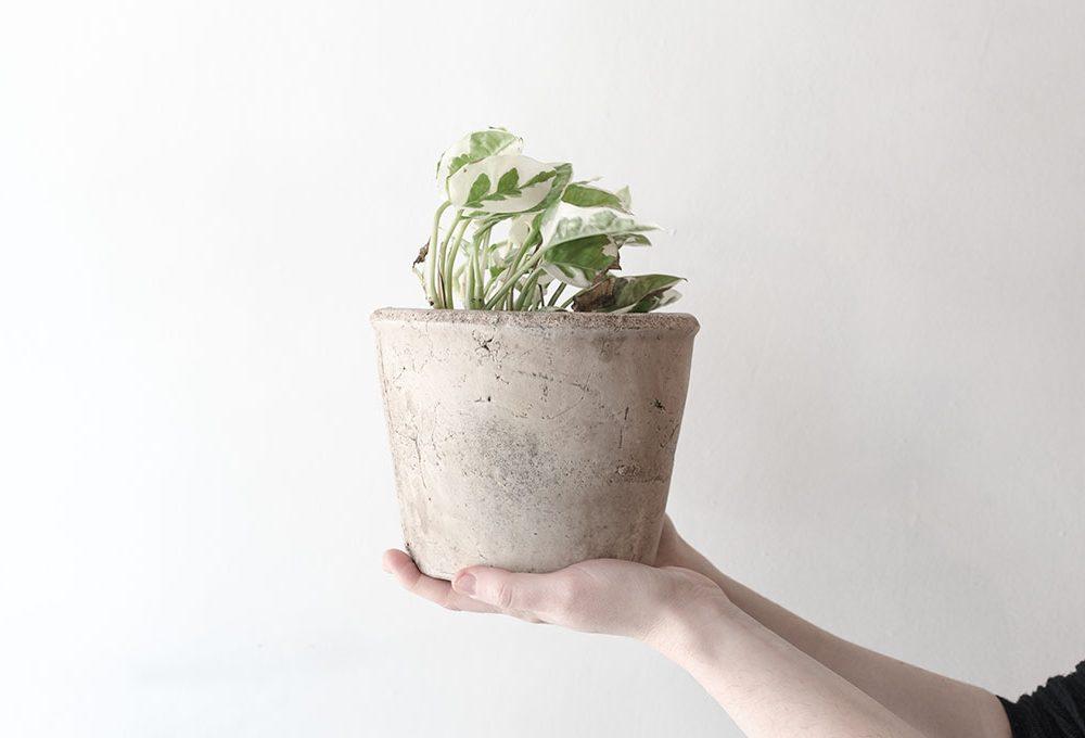 Acclimatazione: la risposta delle piante allo stress