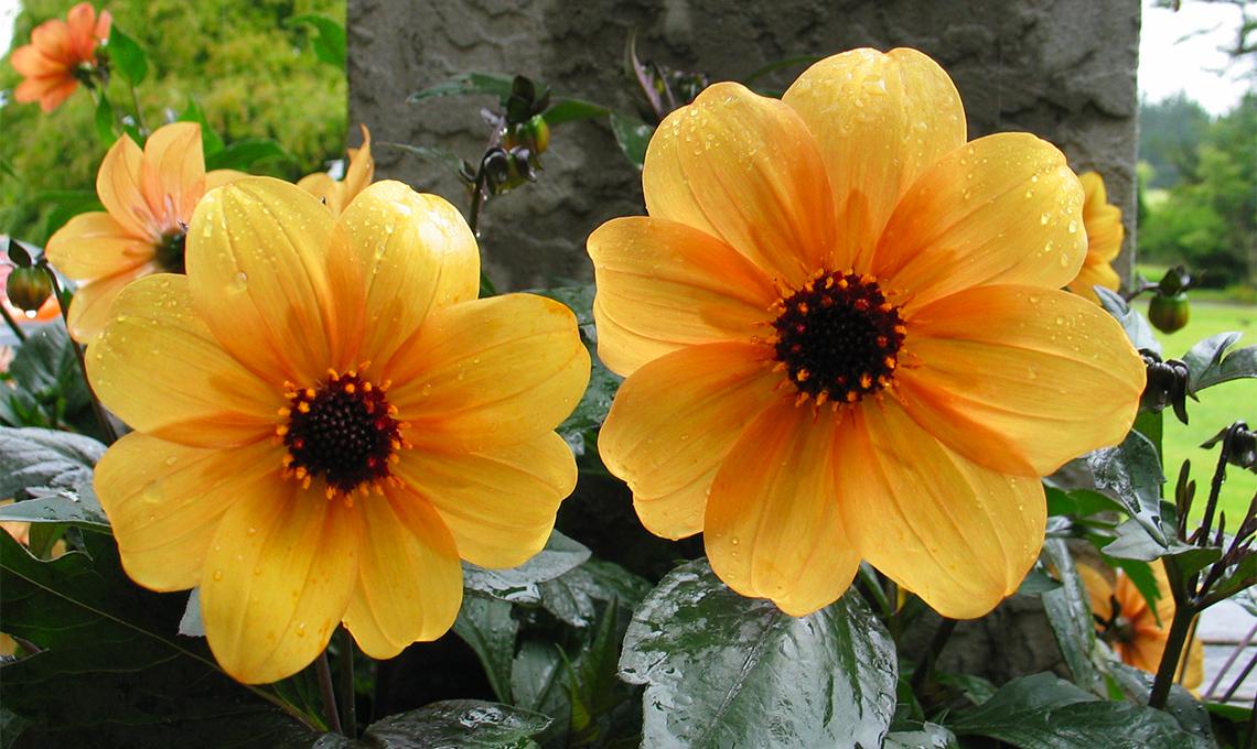Fiori Arancioni.Fiori Arancioni Casafacile