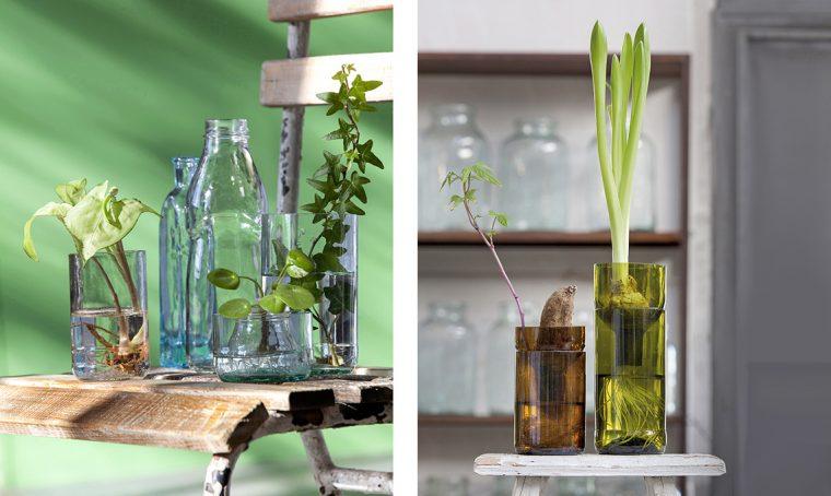 Moltiplica le tue piante con le talee in acqua