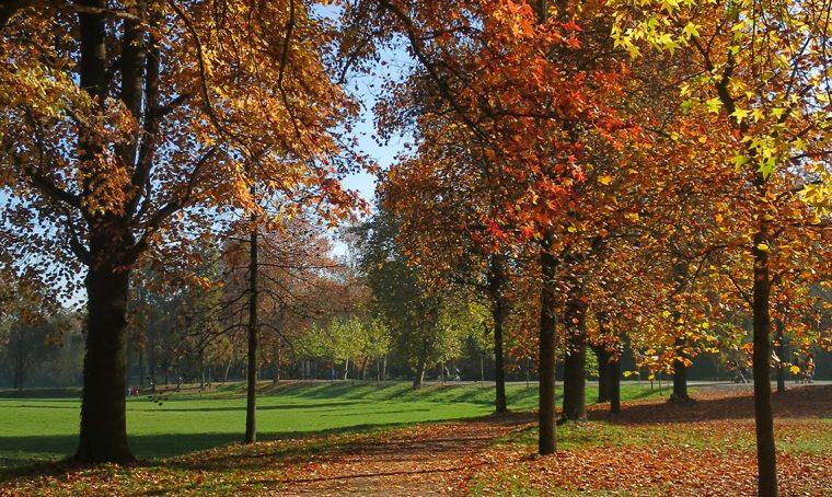 5 cose da fare con le foglie