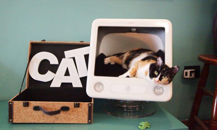 Neko Cafè: accarezzare un gatto seduti al bistrot