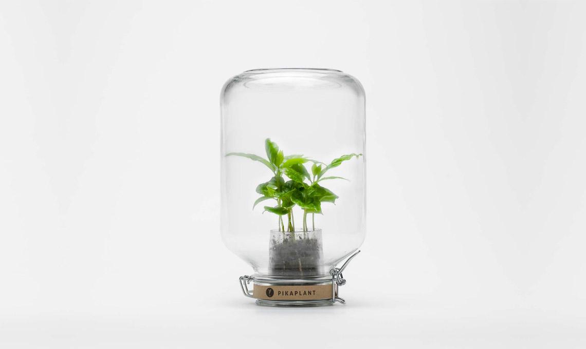 Pikaplant Jar (69,99 euro)