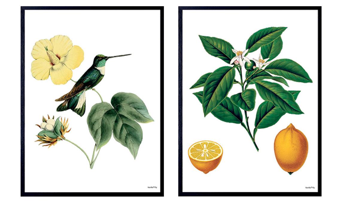 poster botanici