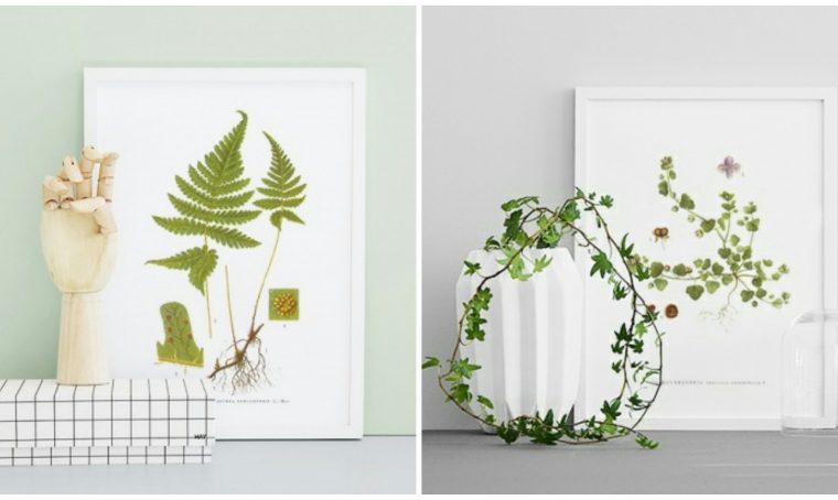 Decorare gli ambienti con le stampe botaniche